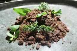 Десерт: темный шоколад, фундук, травы